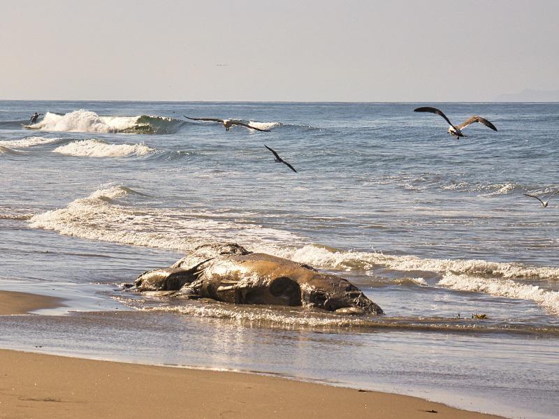 علت مرگ سریالی نهنگ&zwnjها در جزیره کیش تعیین شد